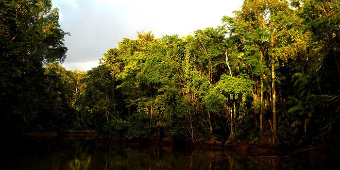 Furos e Igarapés, Pará 005 - Mundo Gekos Receptivo
