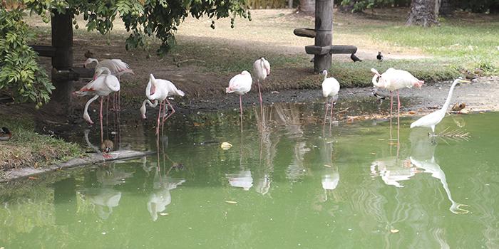 Flamingo no Mangal das Garças, Belém, Pará - Mundo Gekos Receptivo