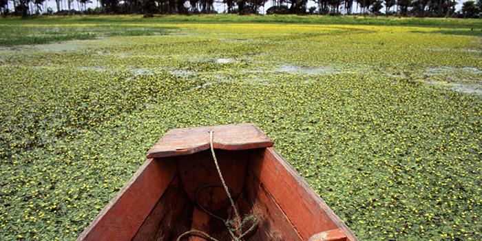 Passeio de Canoa, Marajó, Pará 001 - Mundo Gekos Receptivo