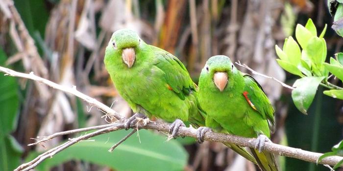 Ilha dos Papagaios, Pará 002 - Mundo Gekos Receptivo