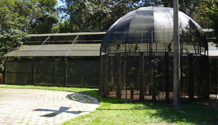 Orquidário do Museu da Amazônia (MUSA), Manaus, Amazonas 001 - Mundo Gekos Receptivo